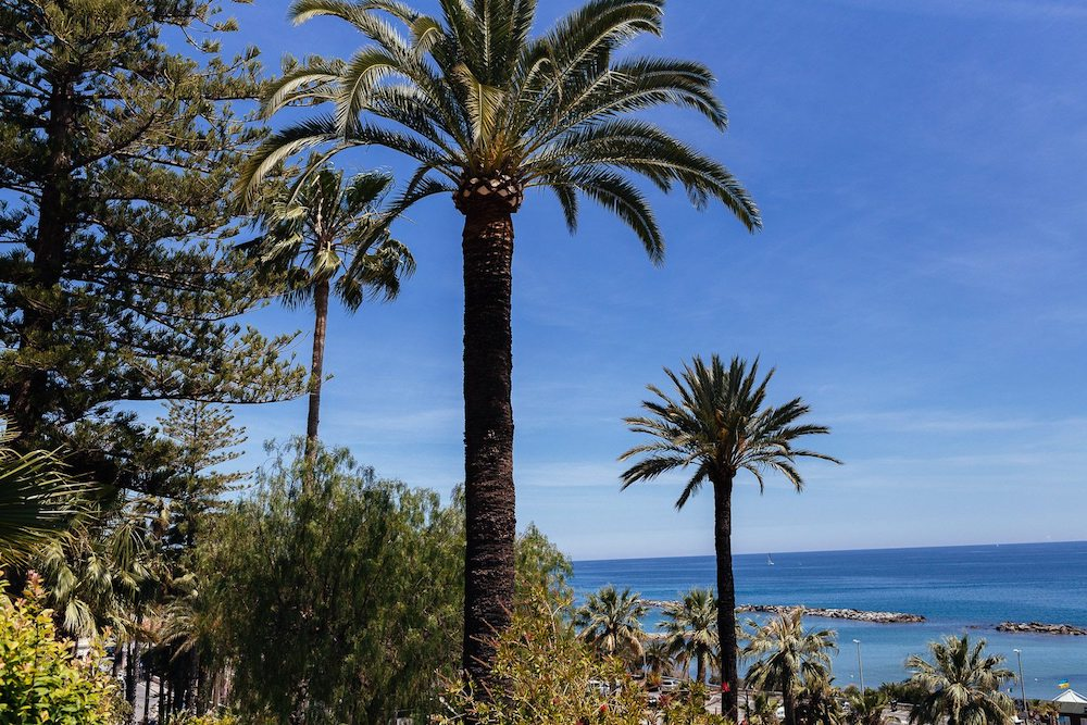 Palm trees Sanremo Luca Vieri photographer